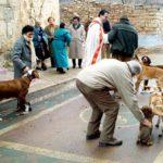 Fiestas de San Antón en Aras de los Olmos