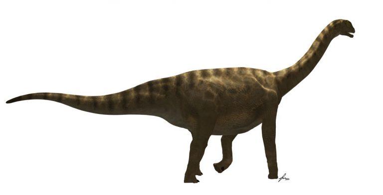 El Losillasaurus Giganteus