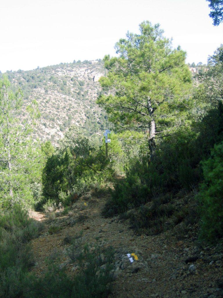 Rutas a pie en senda de las carboneras Aras de los Olmos